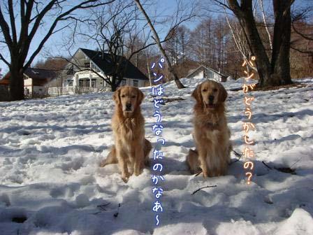 氷点下12℃の散歩そして・・・_f0064906_19393421.jpg