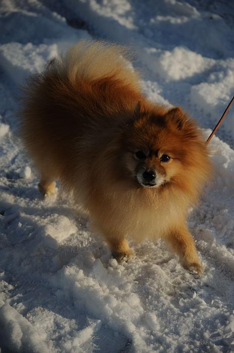 おいでやす~大雪の嵐山へ♪ 上り編_f0032011_2144567.jpg