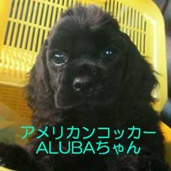 子犬お届け大全集!_c0070714_13503052.jpg