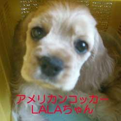子犬お届け大全集!_c0070714_13515242.jpg