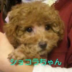 子犬お届け大全集!_c0070714_13534791.jpg