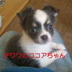 子犬お届け大全集!_c0070714_1431558.jpg