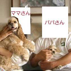 子犬お届け大全集★パート2_c0070714_14382322.jpg