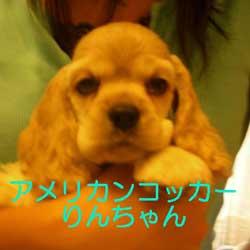 子犬お届け大全集★パート2_c0070714_1440217.jpg