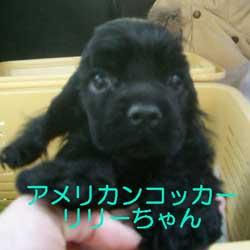 子犬お届け大全集★パート2_c0070714_14414360.jpg