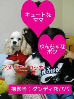 子犬お届け大全集★パート2_c0070714_14521978.jpg