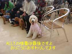 子犬お届け大全集★パート2_c0070714_14541659.jpg