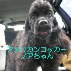 子犬お届け大全集★パート2_c0070714_15143684.jpg