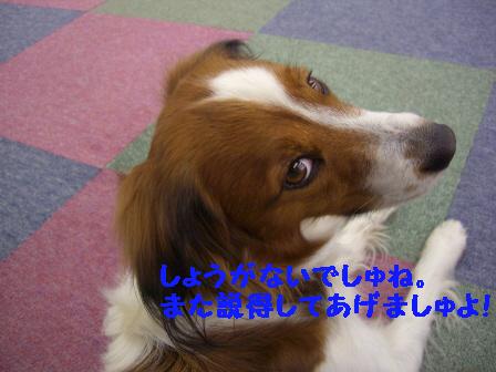 f0080745_15363865.jpg