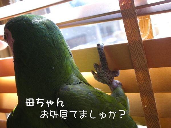 f0132055_9684.jpg