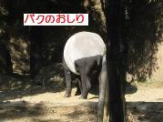 b0119876_1150265.jpg