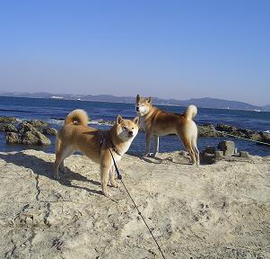 三浦半島に遊びに行きました~_e0023790_21265559.jpg