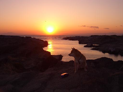 三浦半島に遊びに行きました~_e0023790_2159570.jpg