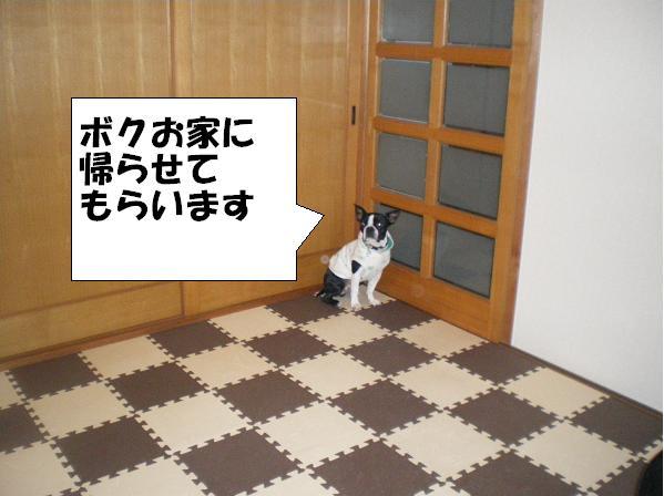 c0141900_20232321.jpg