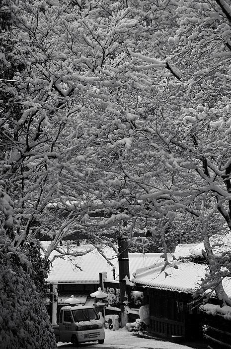 おいでやす~大雪の嵐山へ♪ 折り返し編_f0032011_1955378.jpg
