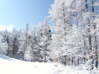 雪の華_d0109415_10552552.jpg
