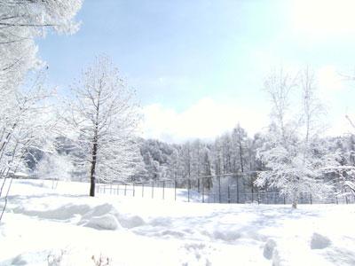 雪の華_d0109415_10554329.jpg
