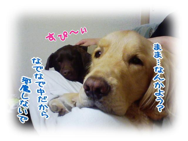 f0109418_1551322.jpg