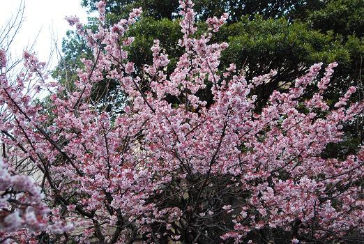 春の兆し_c0099133_14122743.jpg