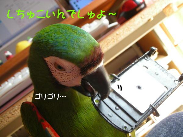 f0132055_916076.jpg
