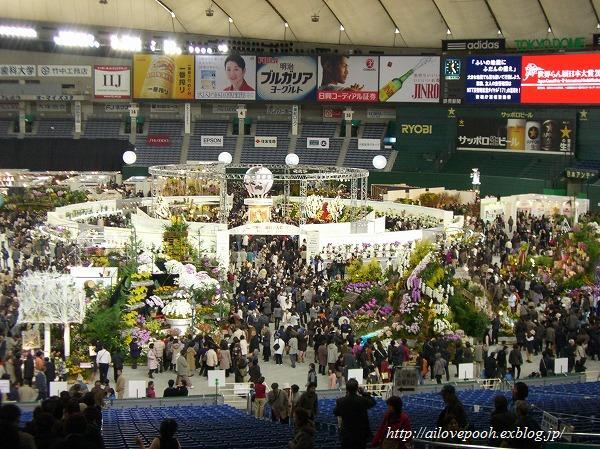 世界らん展日本大賞2008_a0106457_22413024.jpg