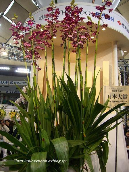 世界らん展日本大賞2008_a0106457_2242195.jpg