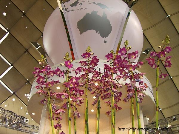 世界らん展日本大賞2008_a0106457_22423320.jpg