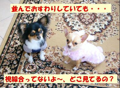 d0089861_659552.jpg