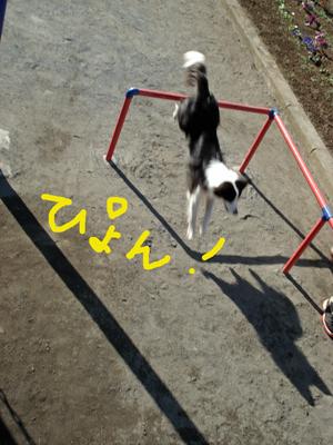 f0132070_00387.jpg