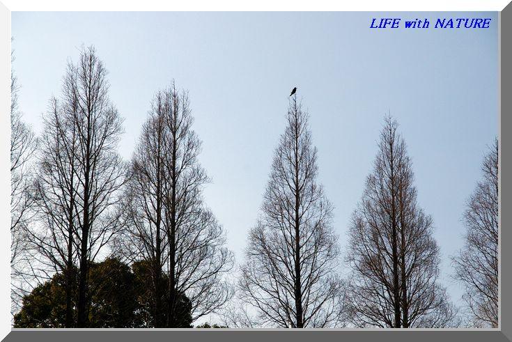 春が待ち遠しい_b0093088_7113914.jpg