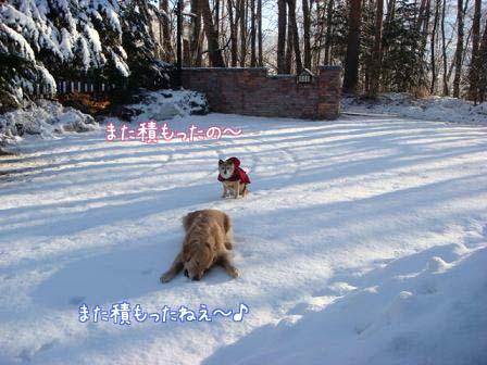 毎晩雪が降って_f0064906_20491778.jpg