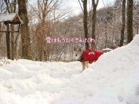 毎晩雪が降って_f0064906_2113352.jpg