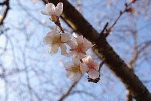 もうすぐ春。_f0122107_123924.jpg