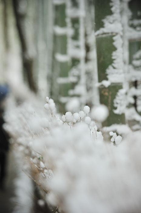 おいでやす~大雪の嵐山へ♪ 下り編_f0032011_19461033.jpg