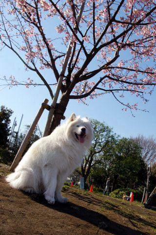 梅は咲いたか、桜は…_c0062832_1702943.jpg