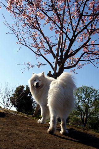 梅は咲いたか、桜は…_c0062832_1704910.jpg