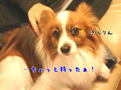 d0013149_7584697.jpg