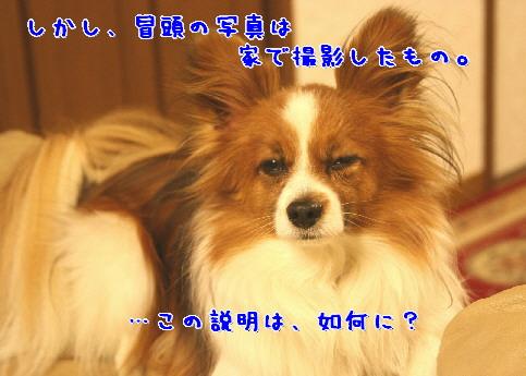 d0013149_87570.jpg