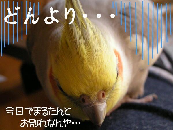 f0132055_23132477.jpg