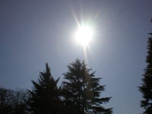 日の光で_c0133561_251721.jpg