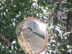 日の光で_c0133561_264477.jpg