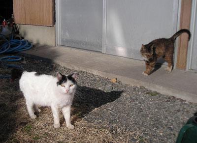 意味も無く、猫ブログ_d0000995_23573151.jpg