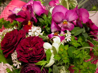 a pansy bouquet_c0102699_0522325.jpg