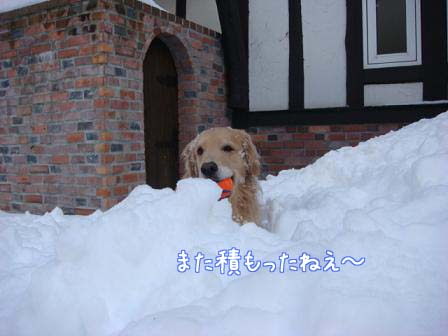 屋根の雪が落ちて_f0064906_1956182.jpg