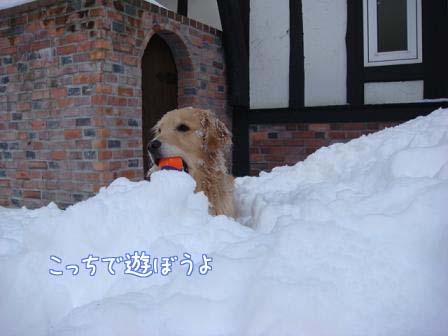 屋根の雪が落ちて_f0064906_19572883.jpg