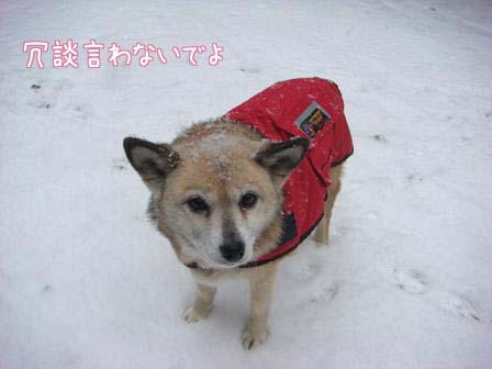屋根の雪が落ちて_f0064906_19575294.jpg