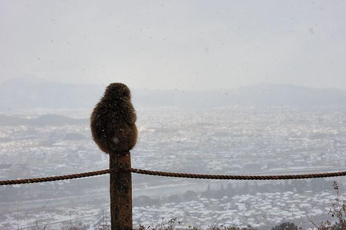 雪猿@岩田山モンキーパーク_f0032011_20142367.jpg