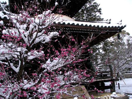 清涼寺(嵯峨釈迦堂)など_e0048413_2219361.jpg