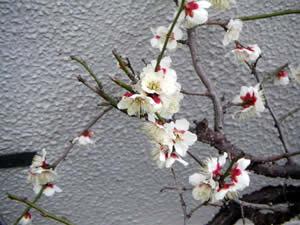春の足音…。_d0035245_19154160.jpg
