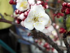 春の足音…。_d0035245_19155924.jpg